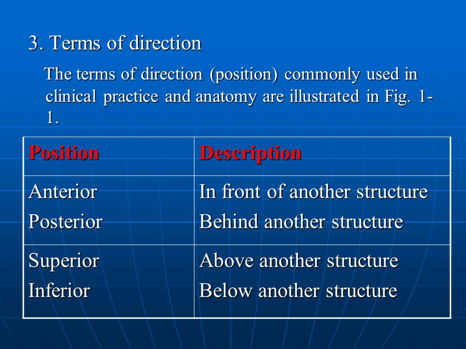 3. Terms of direction The terms of direction (position) commonly used in clinical practice and anatomy are illustrated in Fig. 1-1.
