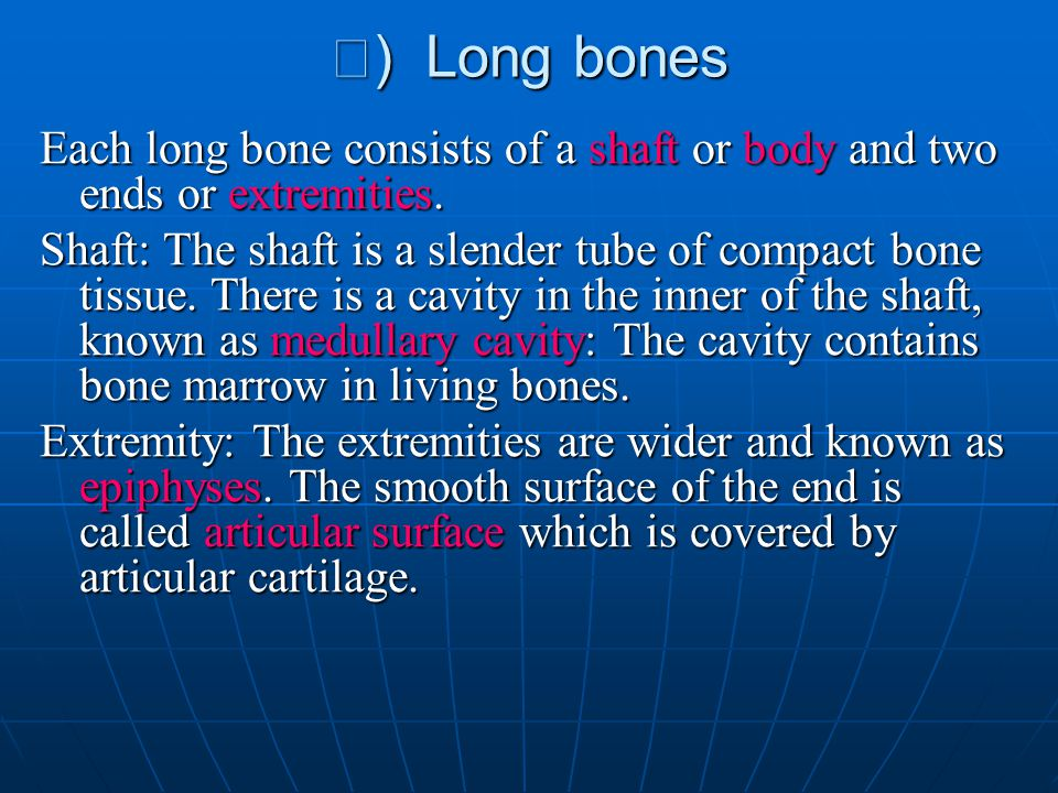 Ⅰ) Long bones Each long bone consists of a shaft or body and two ends or extremities.