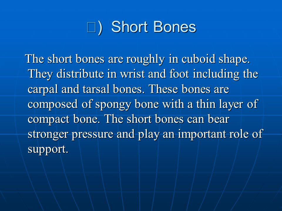Ⅱ) Short Bones