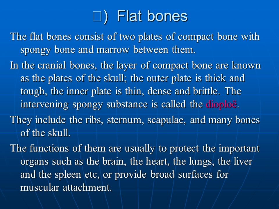 Ⅲ) Flat bones The flat bones consist of two plates of compact bone with spongy bone and marrow between them.