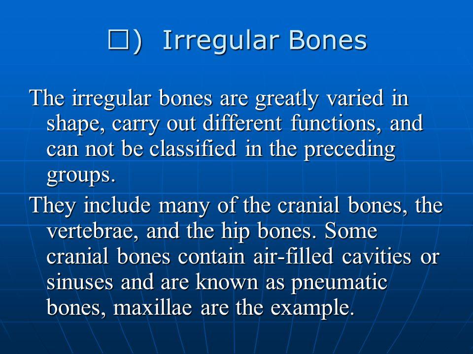 Ⅳ) Irregular Bones