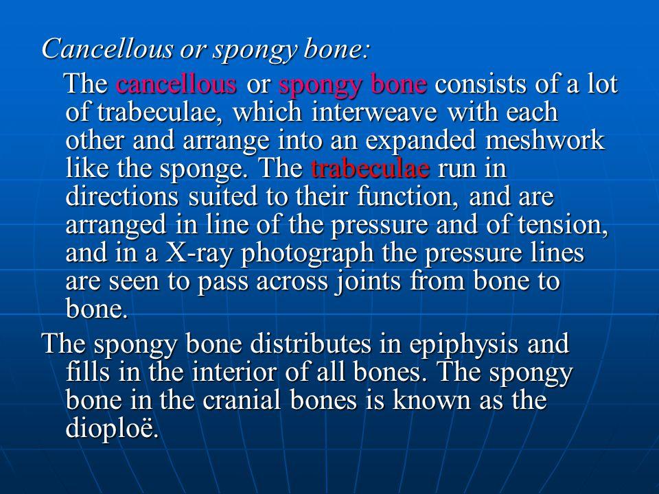 Cancellous or spongy bone: