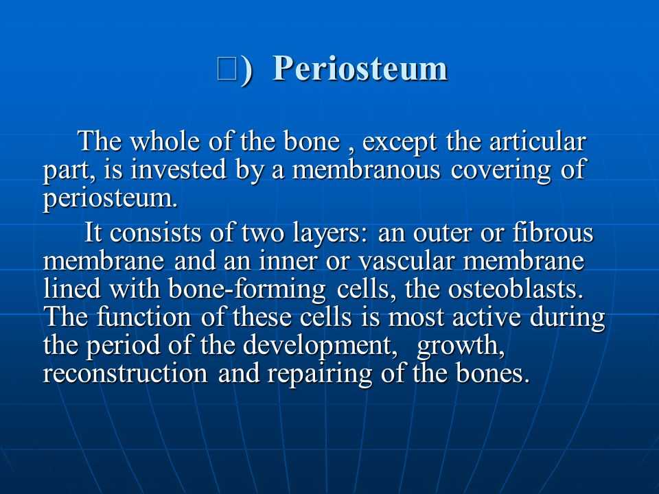 Ⅱ) Periosteum The whole of the bone , except the articular part, is invested by a membranous covering of periosteum.