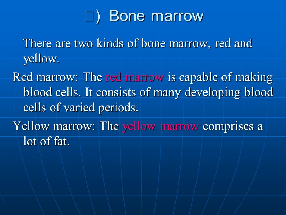 Ⅲ) Bone marrow There are two kinds of bone marrow, red and yellow.