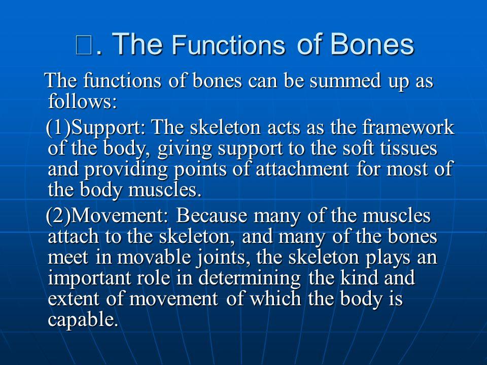 Ⅴ. The Functions of Bones