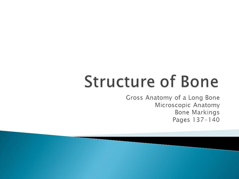 Structure of Bone Gross Anatomy of a Long Bone Microscopic Anatomy ...