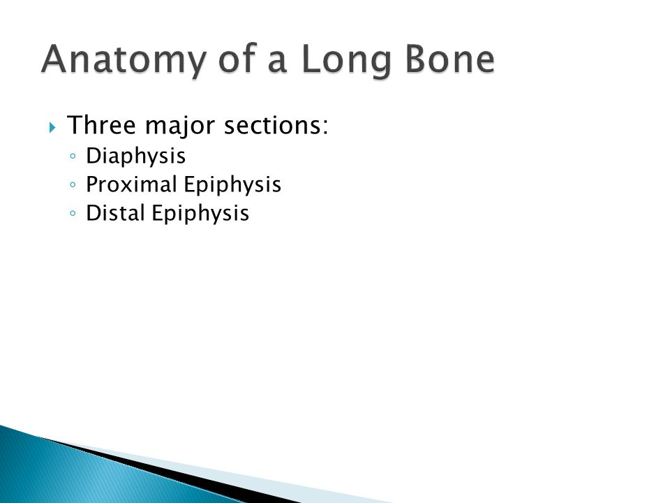 Anatomy of a Long Bone Three major sections: Diaphysis