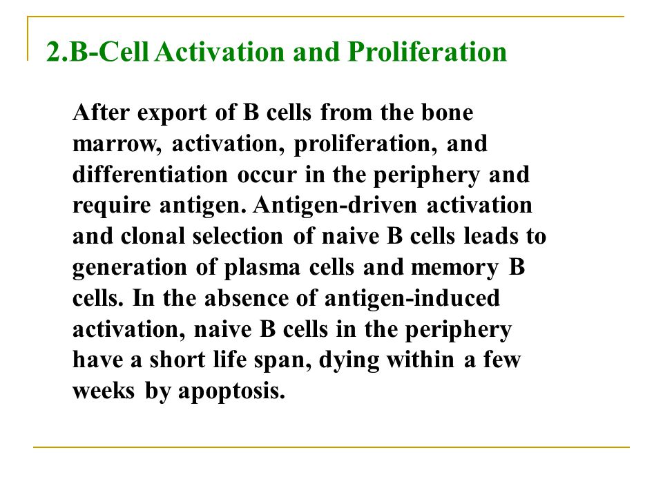 2.B-Cell Activation and Proliferation