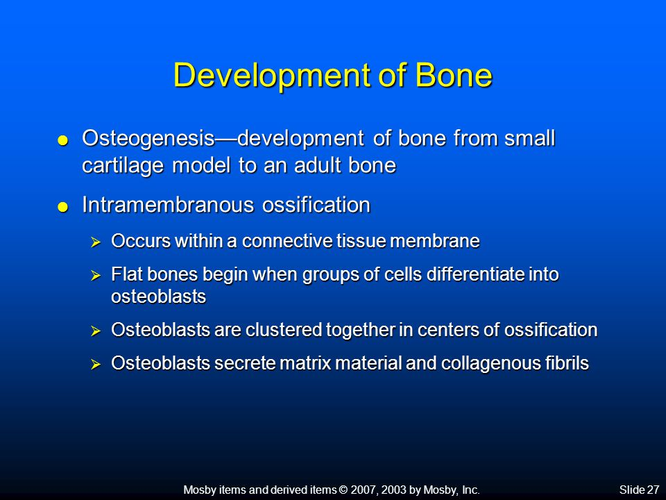 Development of Bone Osteogenesis—development of bone from small cartilage model to an adult bone. Intramembranous ossification.