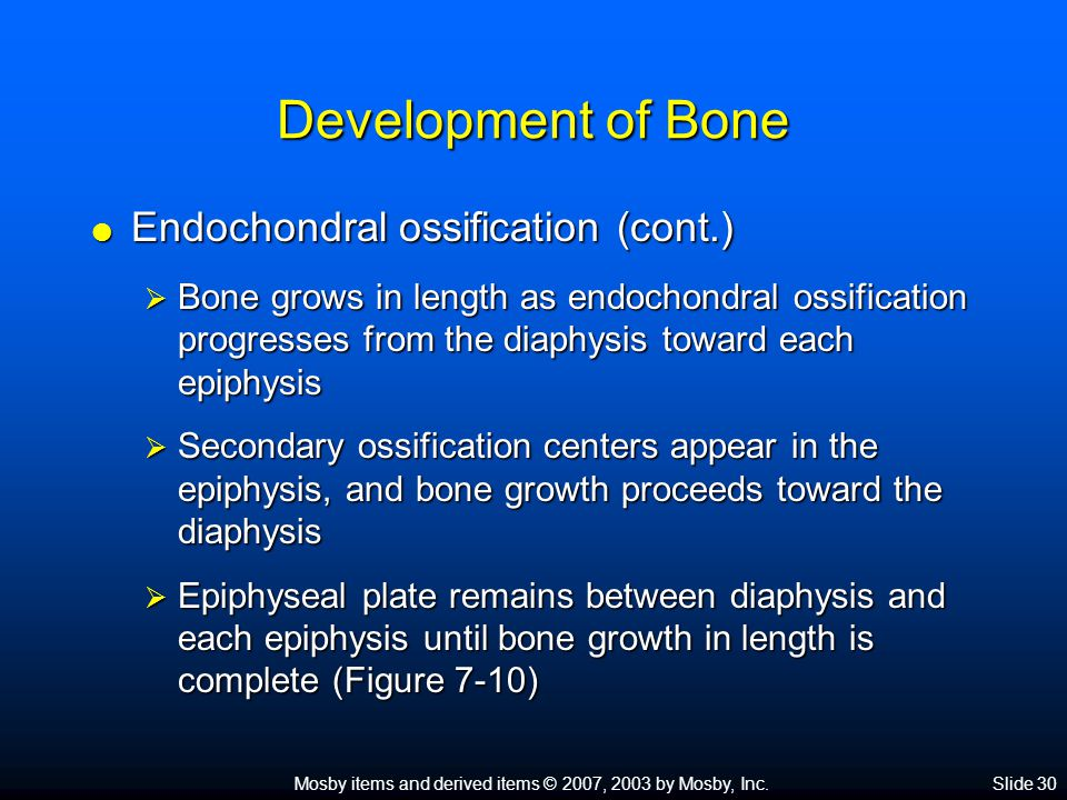 Development of Bone Endochondral ossification (cont.)