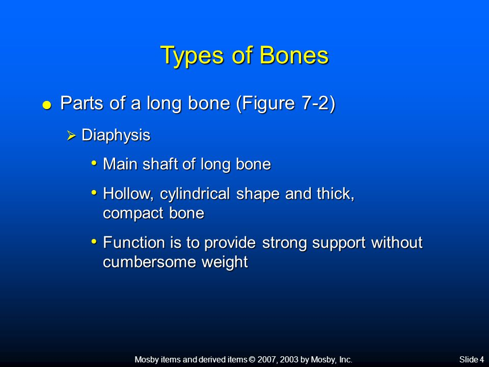 Types of Bones Parts of a long bone (Figure 7-2) Diaphysis