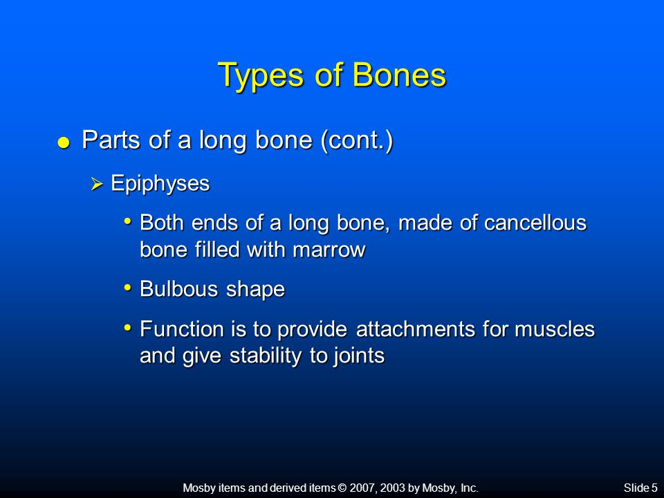 Types of Bones Parts of a long bone (cont.) Epiphyses