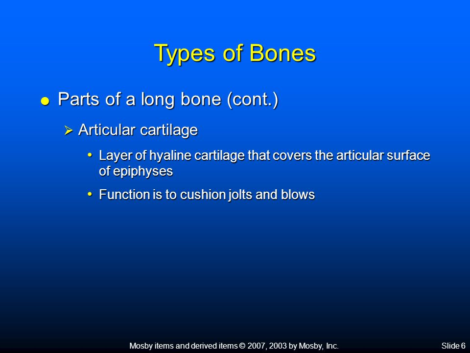 Types of Bones Parts of a long bone (cont.) Articular cartilage