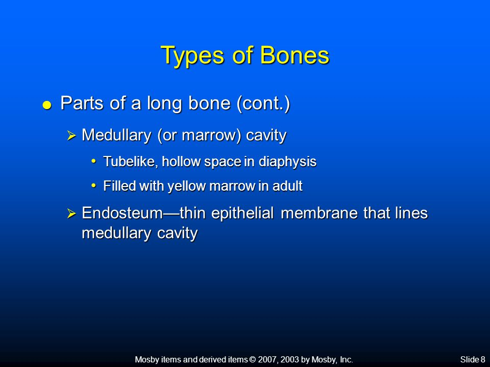 Types of Bones Parts of a long bone (cont.)