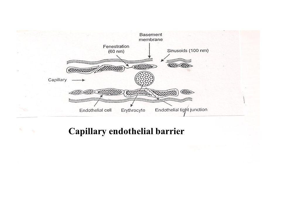 Capillary endothelial barrier