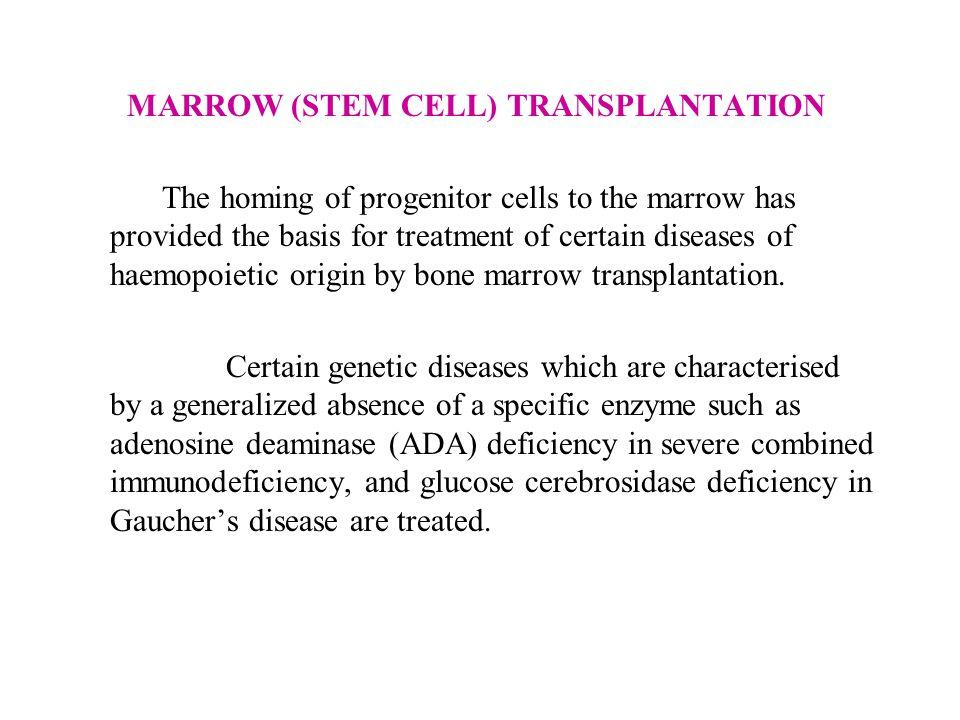 MARROW (STEM CELL) TRANSPLANTATION