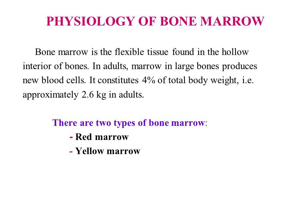 PHYSIOLOGY OF BONE MARROW