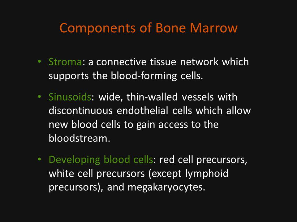 Components of Bone Marrow
