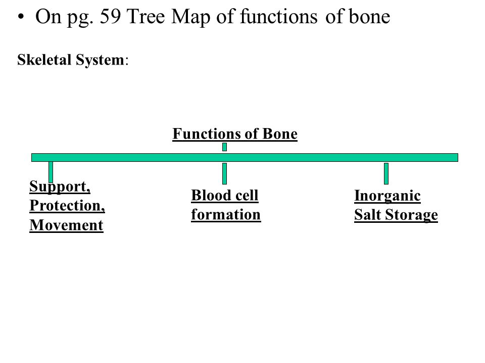On pg. 59 Tree Map of functions of bone