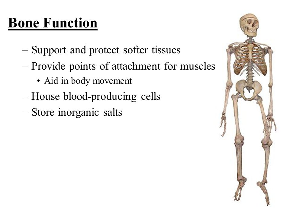 Bone Function Support and protect softer tissues