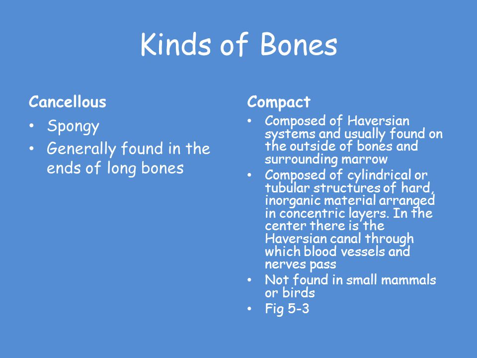 Kinds of Bones Cancellous Compact Spongy