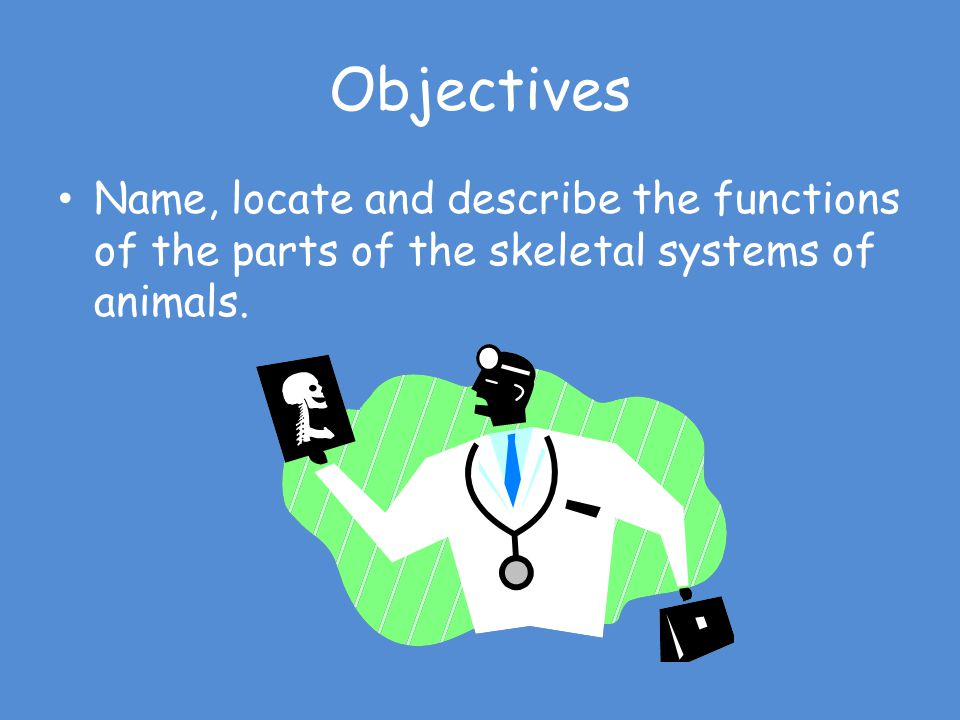 Objectives Name, locate and describe the functions of the parts of the skeletal systems of animals.