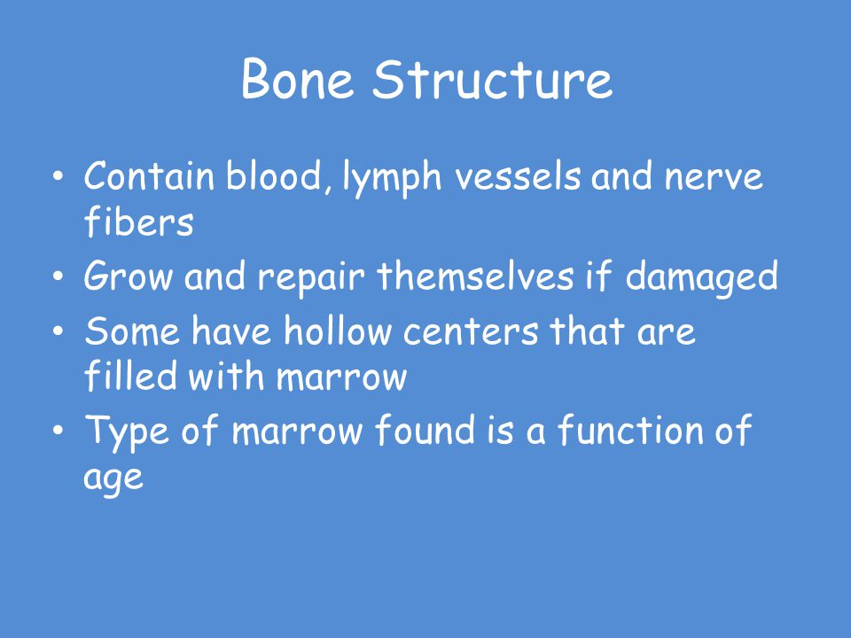 Bone Structure Contain blood, lymph vessels and nerve fibers
