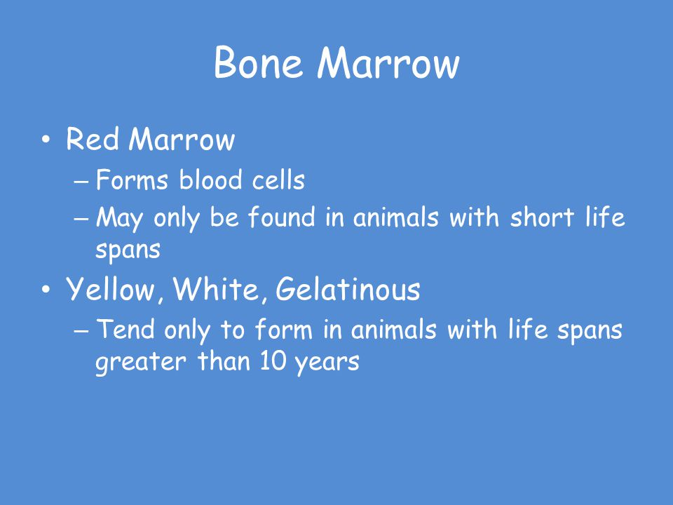 Bone Marrow Red Marrow Yellow, White, Gelatinous Forms blood cells