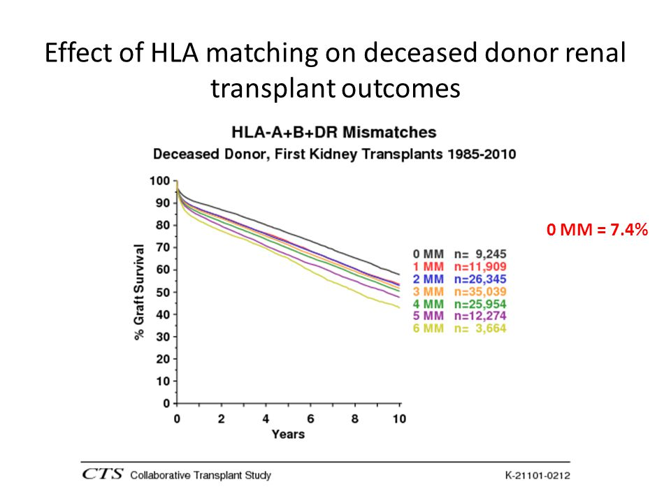 Effect of HLA matching on deceased donor renal transplant outcomes