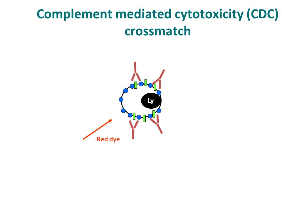 Complement mediated cytotoxicity (CDC) crossmatch