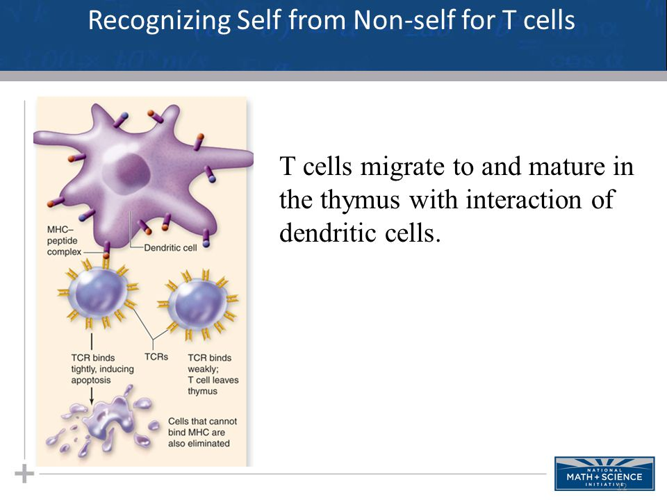 Recognizing Self from Non-self for T cells
