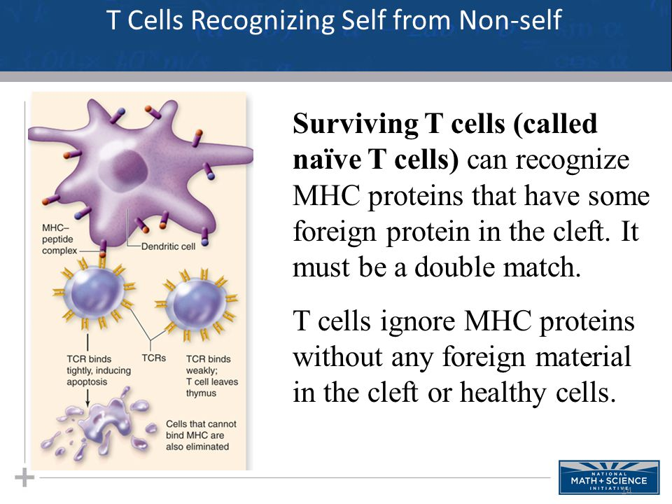 T Cells Recognizing Self from Non-self