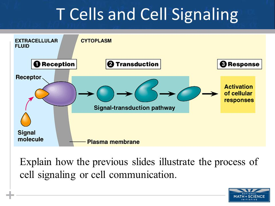 T Cells and Cell Signaling