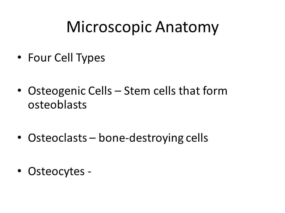 Microscopic Anatomy Four Cell Types