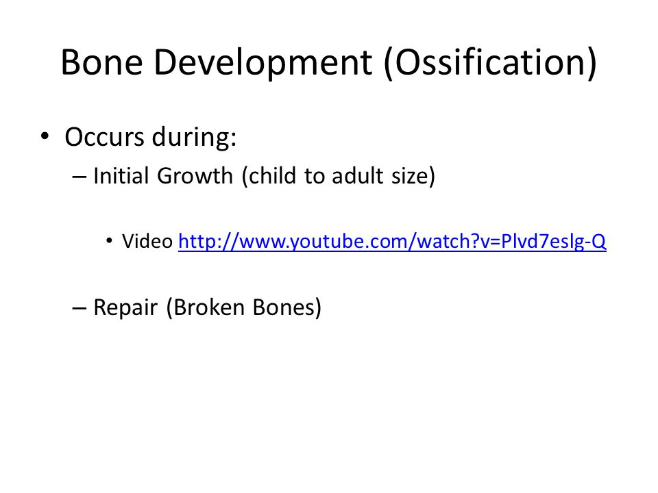 Bone Development (Ossification)
