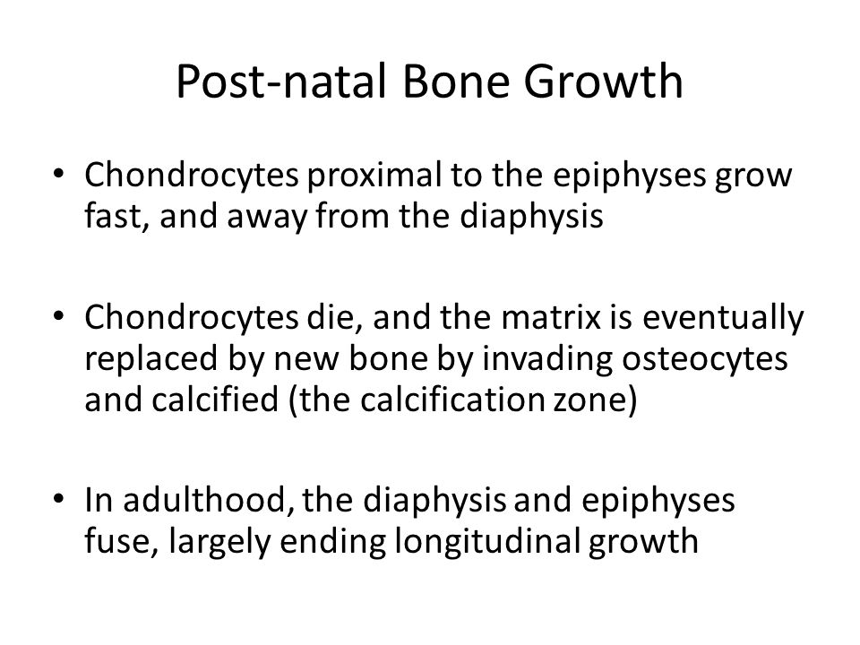 Post-natal Bone Growth