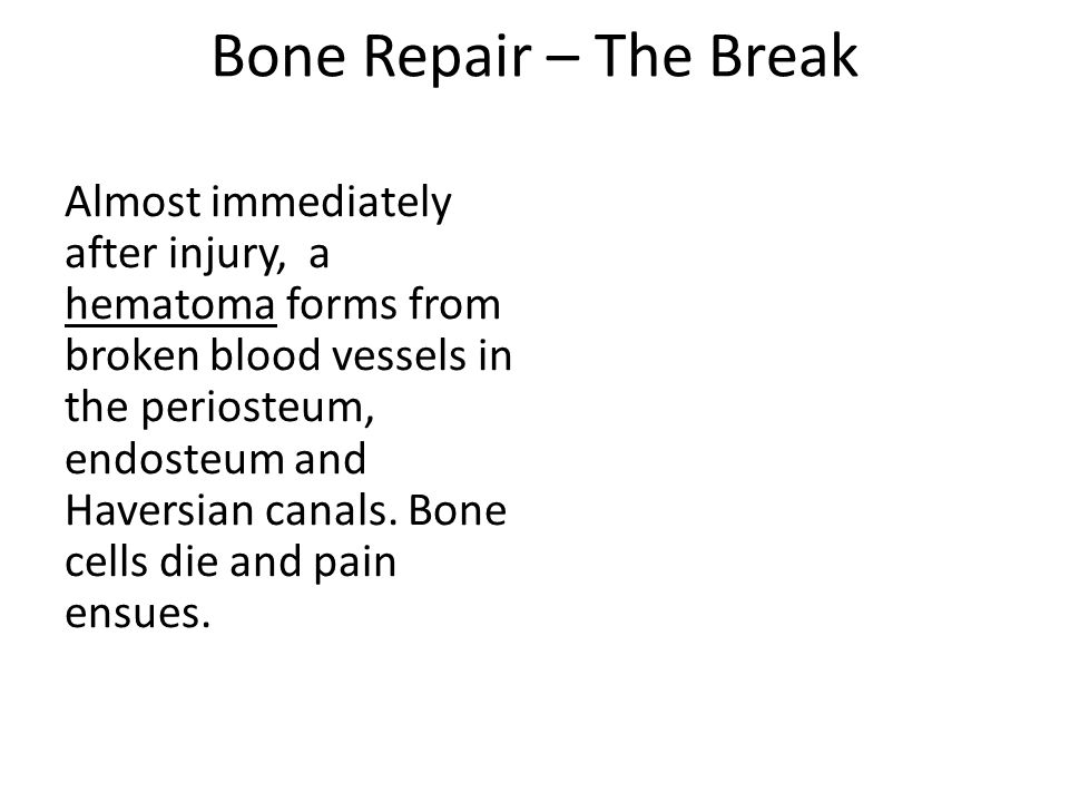 Bone Repair – The Break