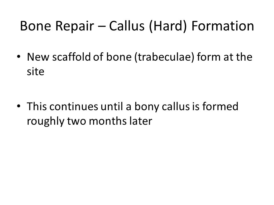 Bone Repair – Callus (Hard) Formation