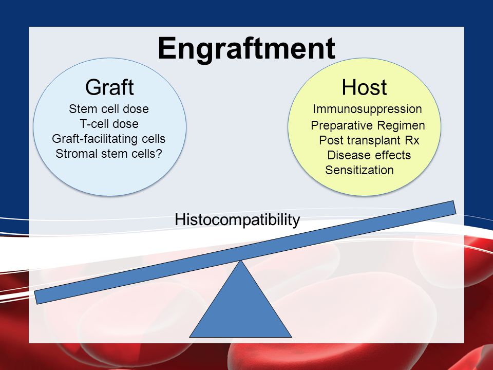 Graft-facilitating cells