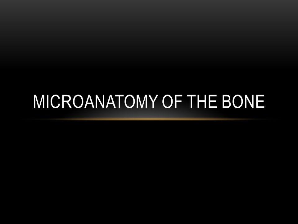 MICROANATOMY OF THE BONE
