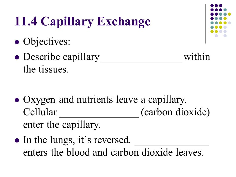 11.4 Capillary Exchange Objectives: