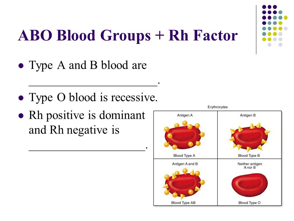 ABO Blood Groups + Rh Factor