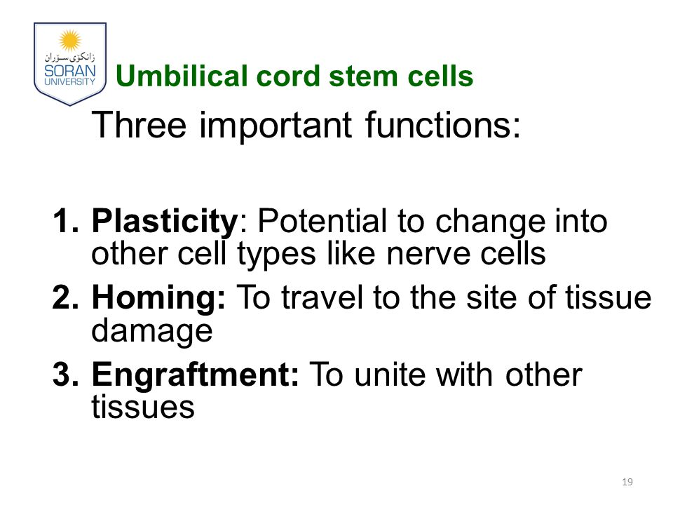 Umbilical cord stem cells