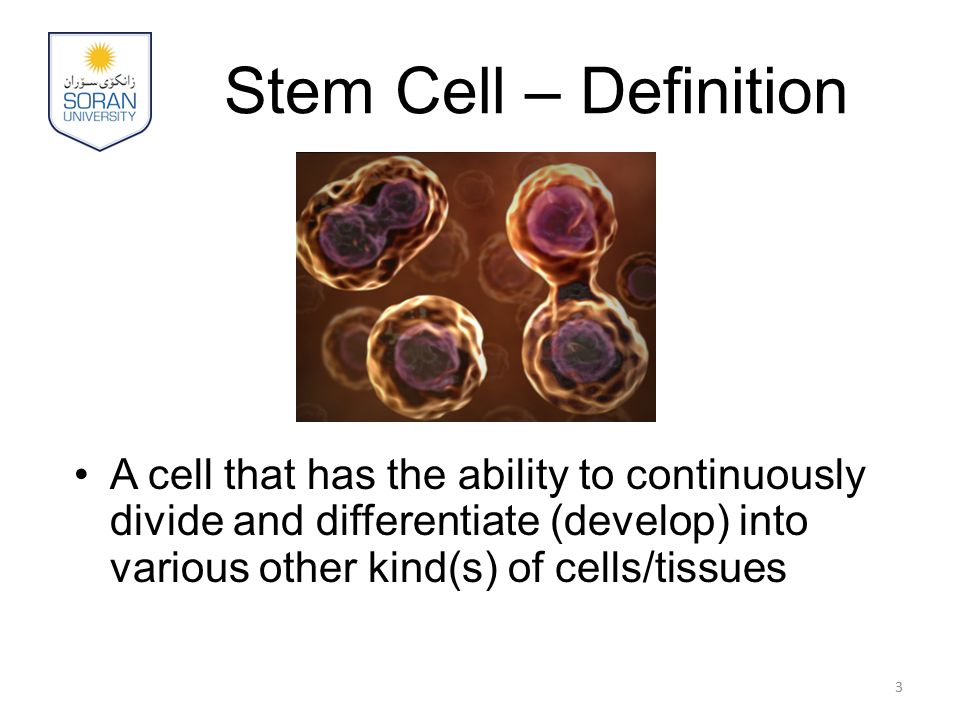 Stem Cell – Definition A cell that has the ability to continuously divide and differentiate (develop) into various other kind(s) of cells/tissues.