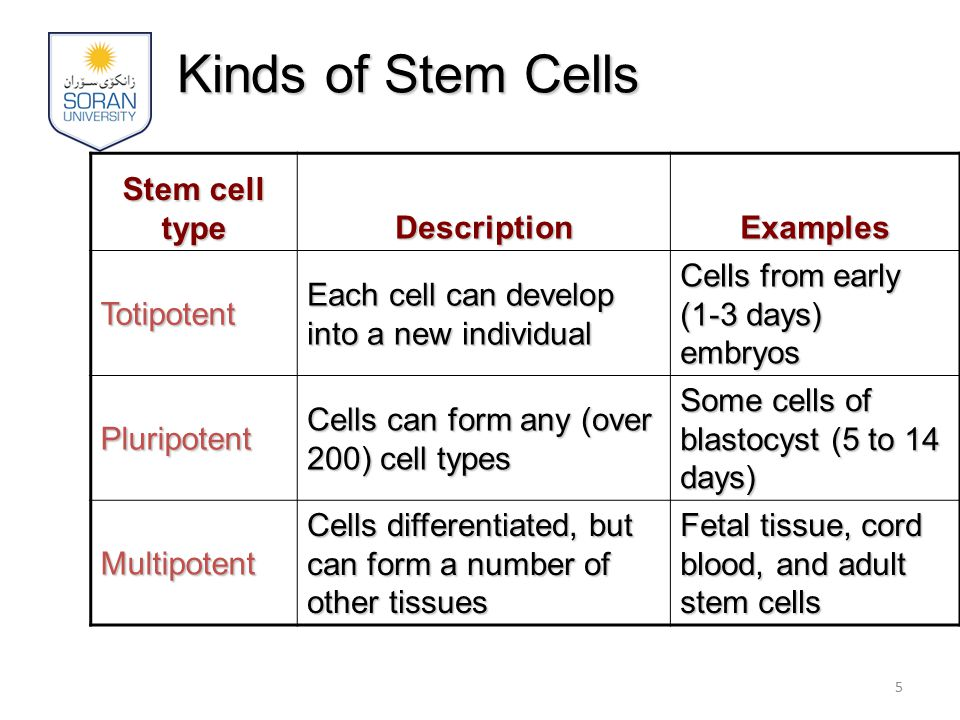 Kinds of Stem Cells Stem cell type Description Examples Totipotent