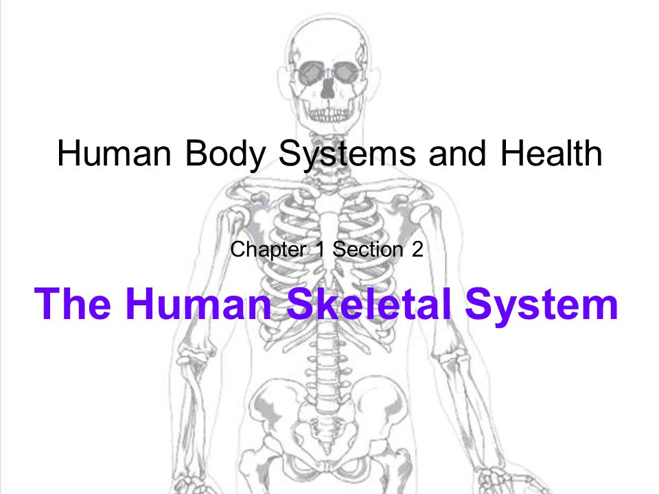 Human Body Systems and Health