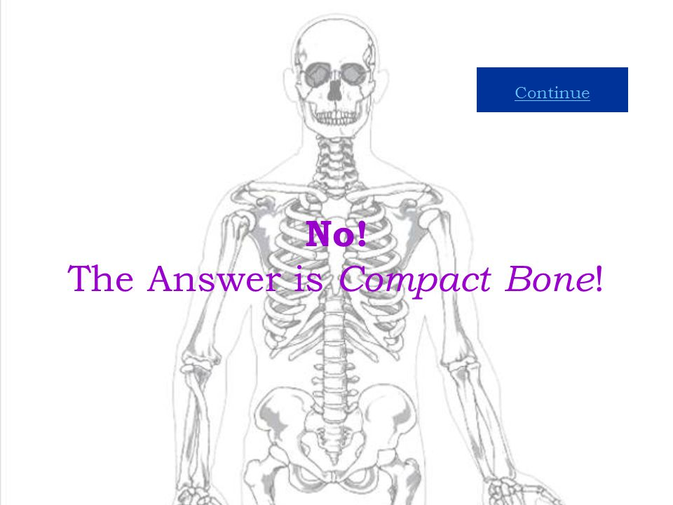 No! The Answer is Compact Bone!