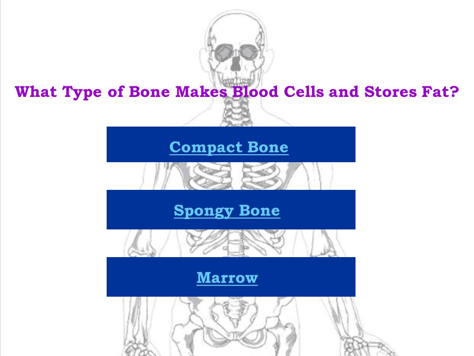 What Type of Bone Makes Blood Cells and Stores Fat