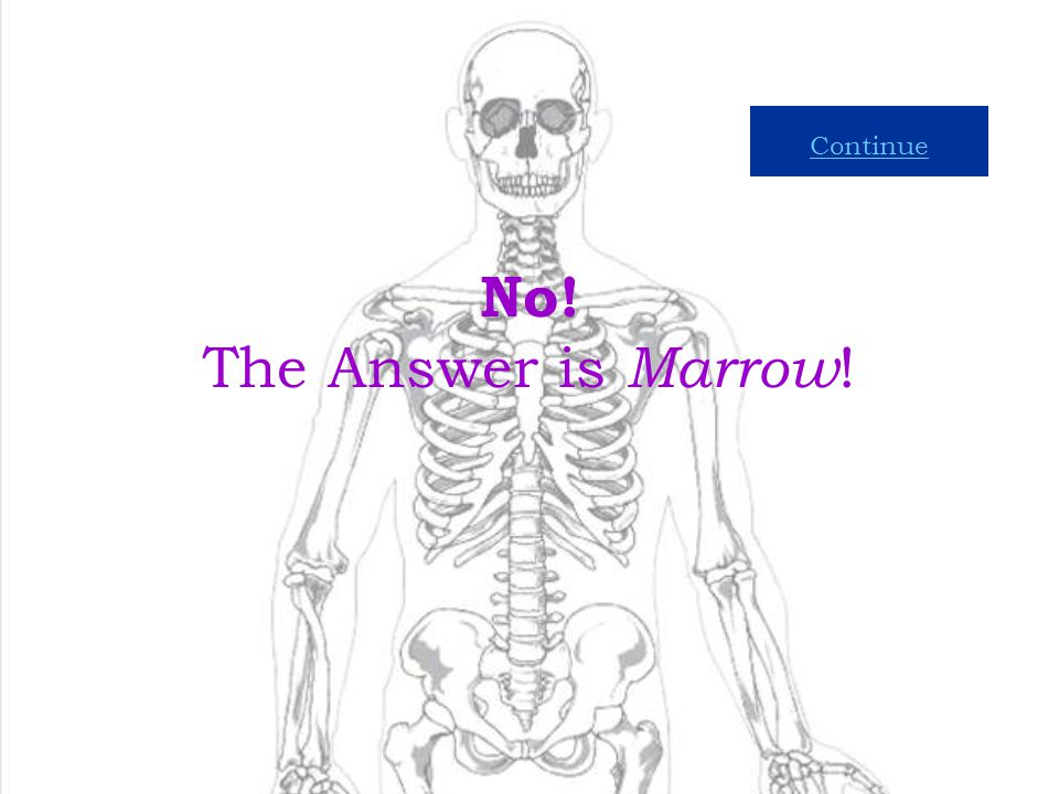 Continue No! The Answer is Marrow!