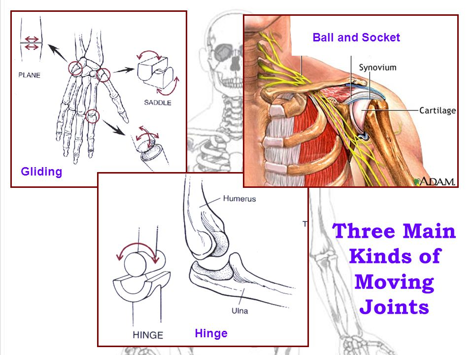 Three Main Kinds of Moving Joints